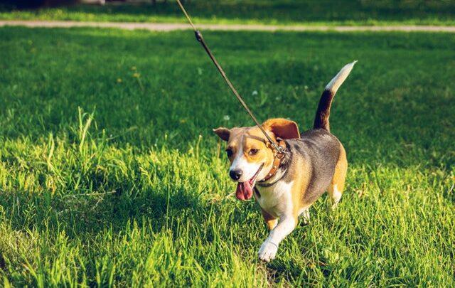 Løb med hund – Sådan gør du, med disse 3 tips