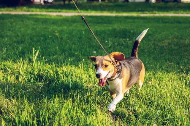 Løb med hund